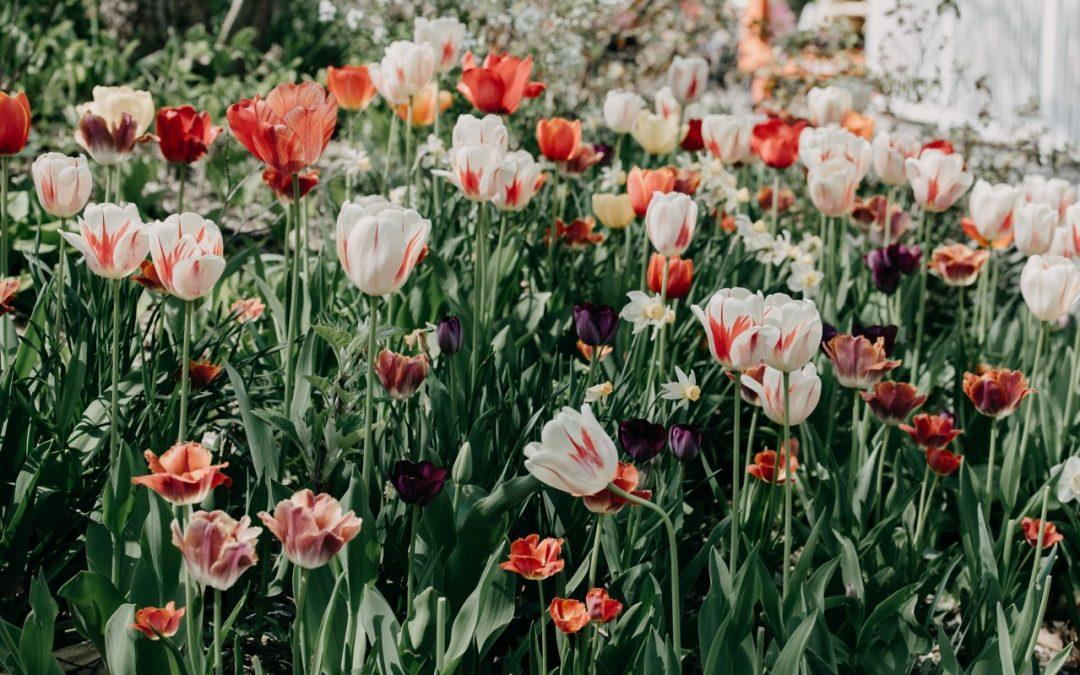 Des astuces pour sublimer un jardin