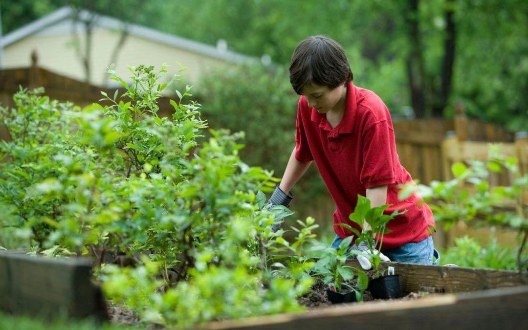 Un professionnel du jardinage saura répondre au besoin d'entretien