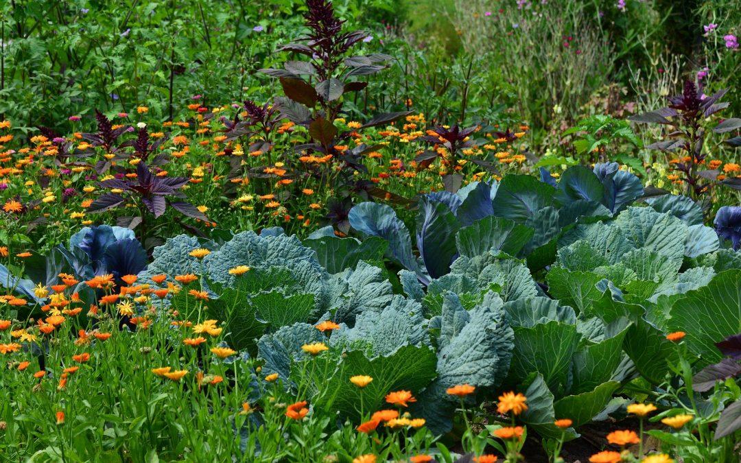 Comment choisir ses légumes ?